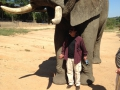 Mr-Majidi-and-a-very-big-ellie